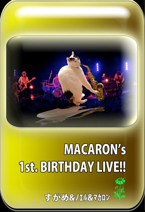 MACARON's1stBIRTHDAY.jpg