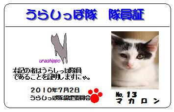 urashippo-no_13-macaron-d2239.jpg